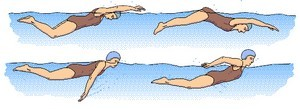 type-de-nage