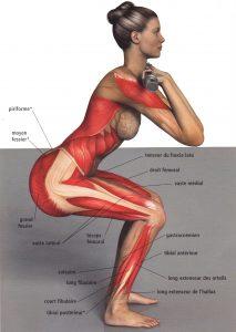 squat-muscles1